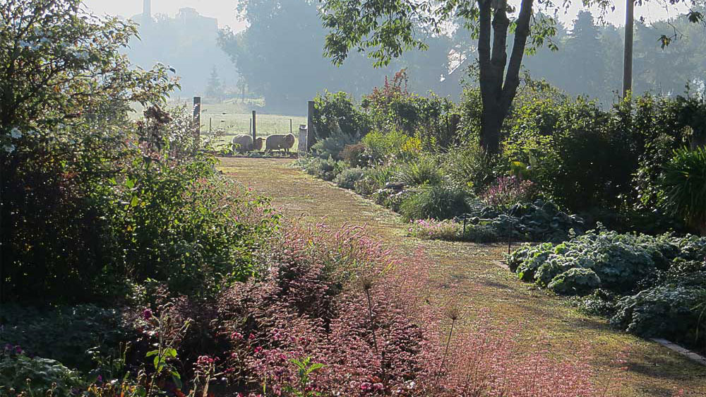 LongBorder with flowering Heuchera