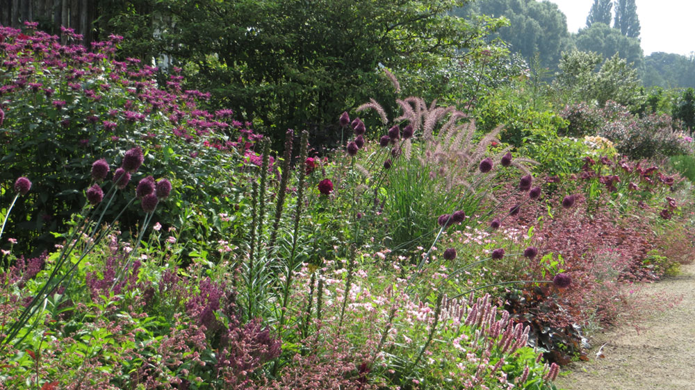 Long Border with purple and red perennials